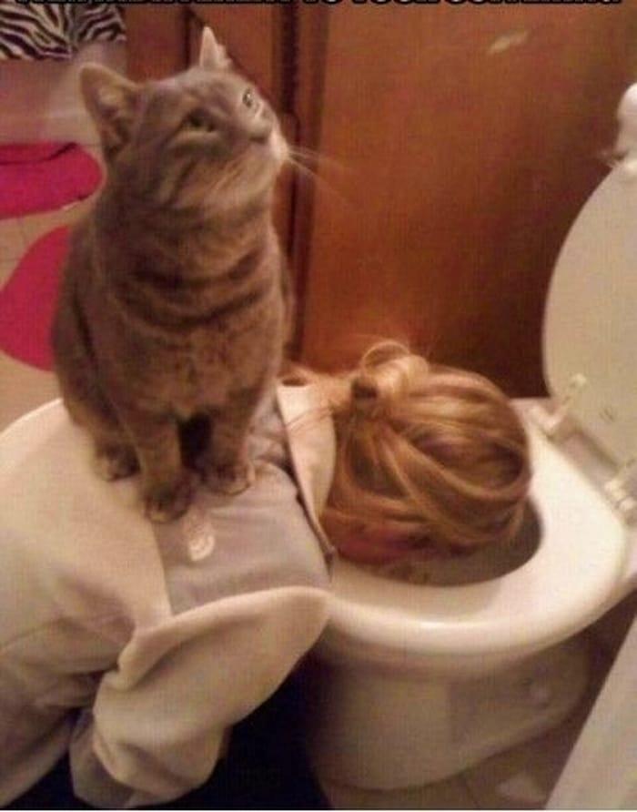 22 fotos provando que os gatos são os verdadeiros donos da casa 14