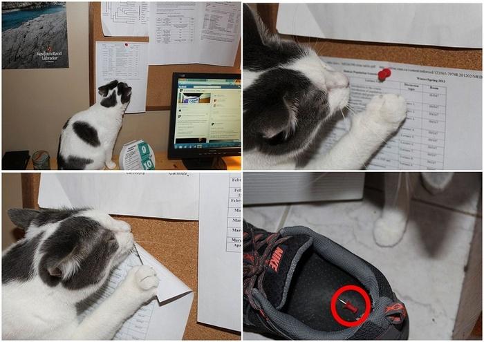22 fotos provando que os gatos são os verdadeiros donos da casa 16