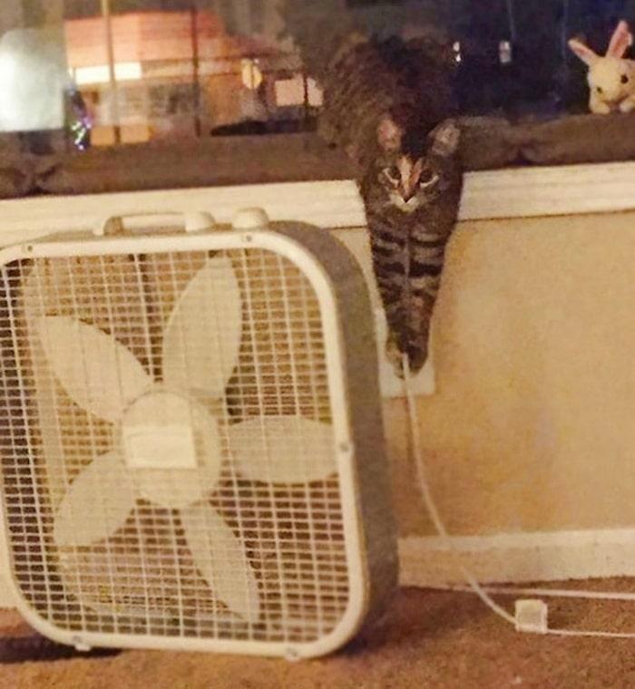 22 fotos provando que os gatos são os verdadeiros donos da casa 18