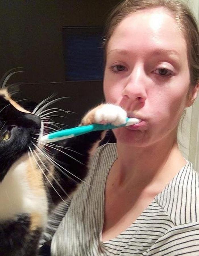 22 fotos provando que os gatos são os verdadeiros donos da casa 19