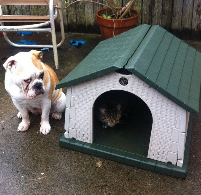 22 fotos provando que os gatos são os verdadeiros donos da casa 20