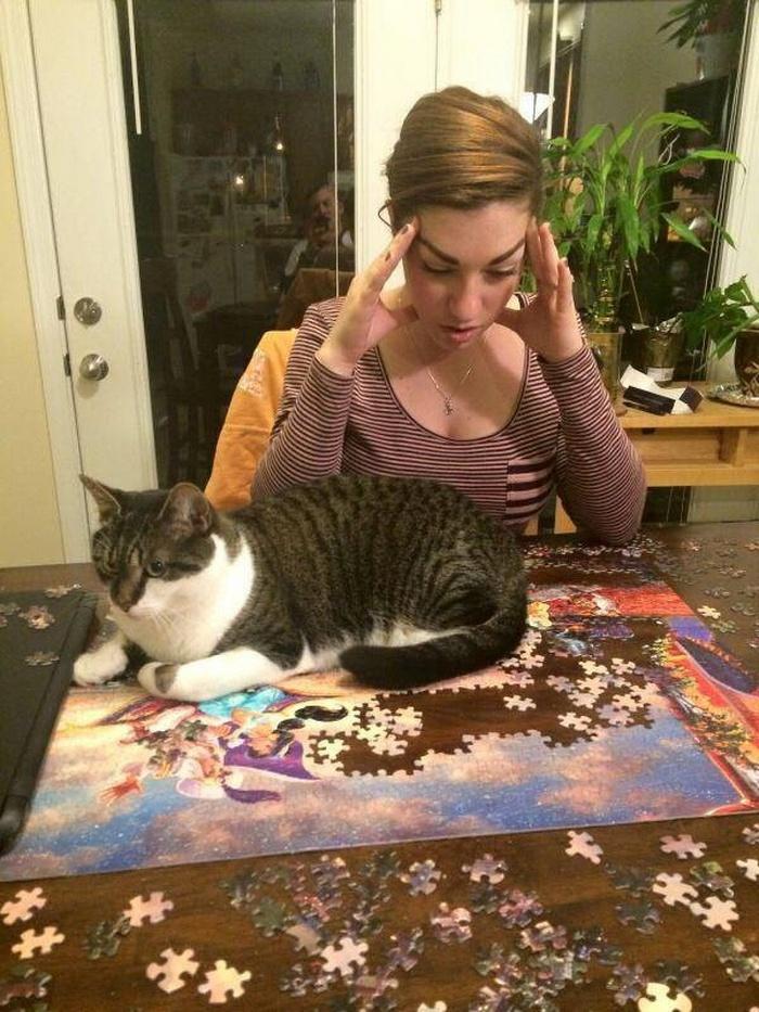 22 fotos provando que os gatos são os verdadeiros donos da casa 21