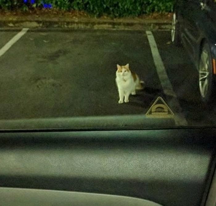 22 fotos provando que os gatos são os verdadeiros donos da casa 22