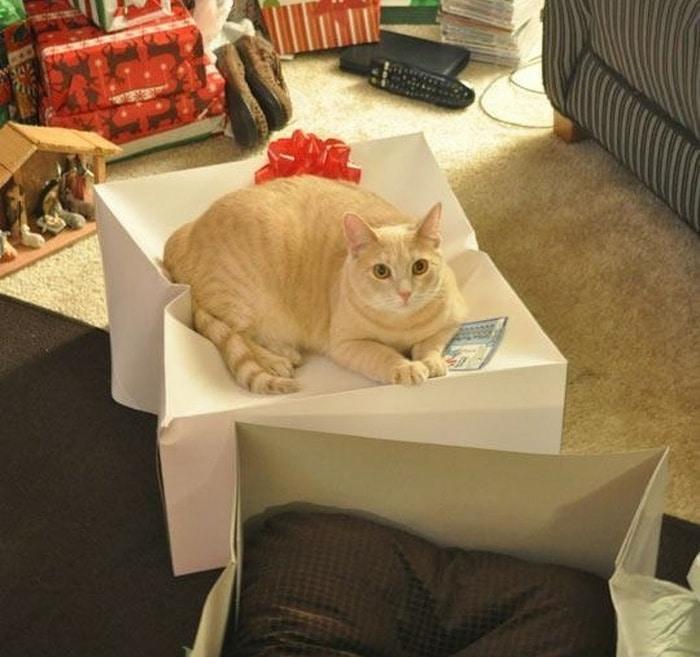 22 fotos provando que os gatos são os verdadeiros donos da casa 23