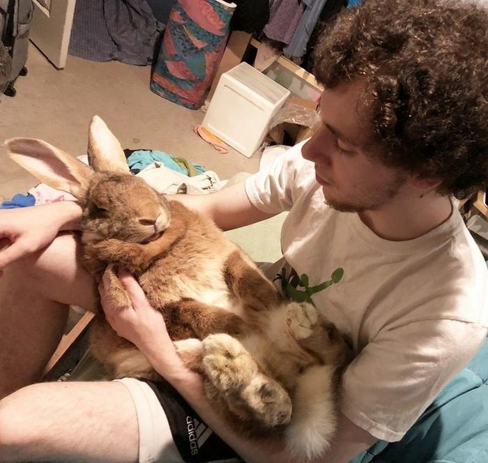 17 histórias emocionantes sobre animais cheias de amor e amizade 10