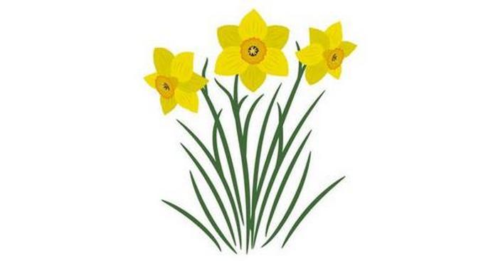 Março - Narciso