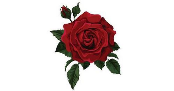 Junho - Rosa