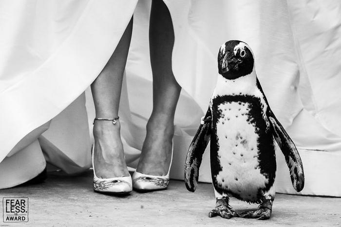 38 melhores fotos de casamento de 2018 33