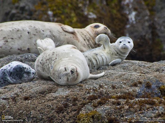 19 animais fotogênicos que superam qualquer modelo profissional 3