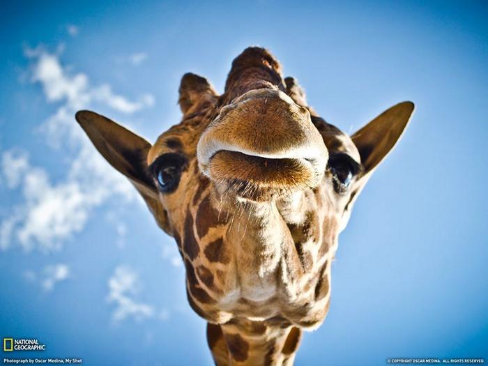 19 animais fotogênicos que superam qualquer modelo profissional 4