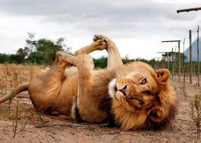 19 animais fotogênicos que superam qualquer modelo profissional 6