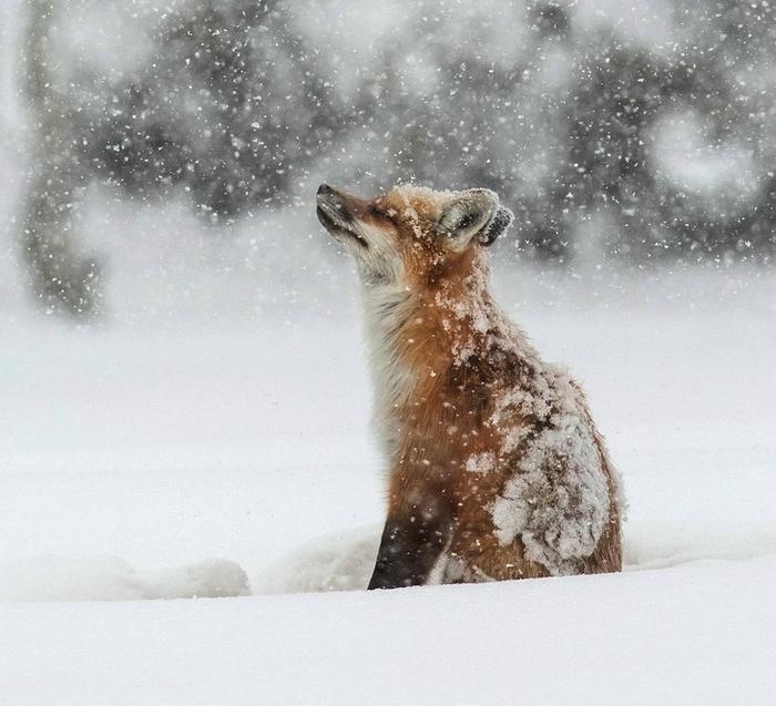 19 animais fotogênicos que superam qualquer modelo profissional 7