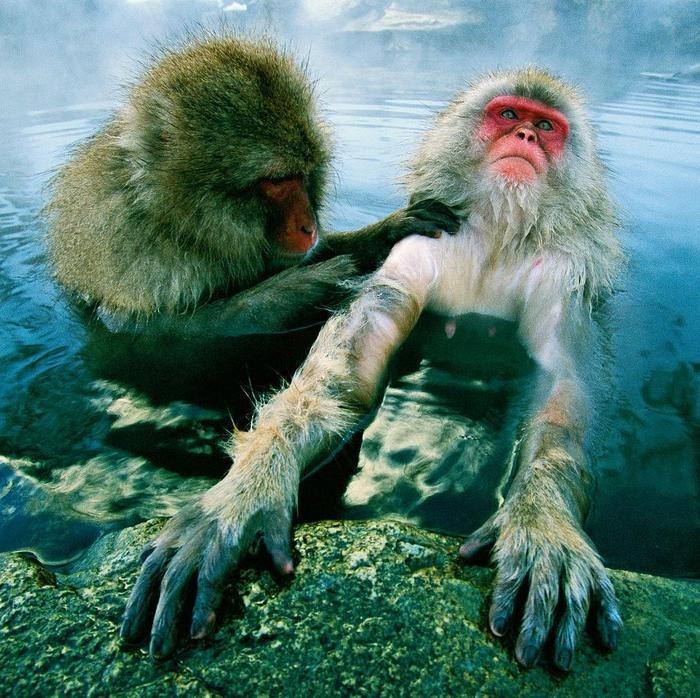 19 animais fotogênicos que superam qualquer modelo profissional 11