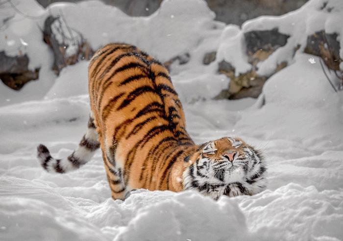 19 animais fotogênicos que superam qualquer modelo profissional 12
