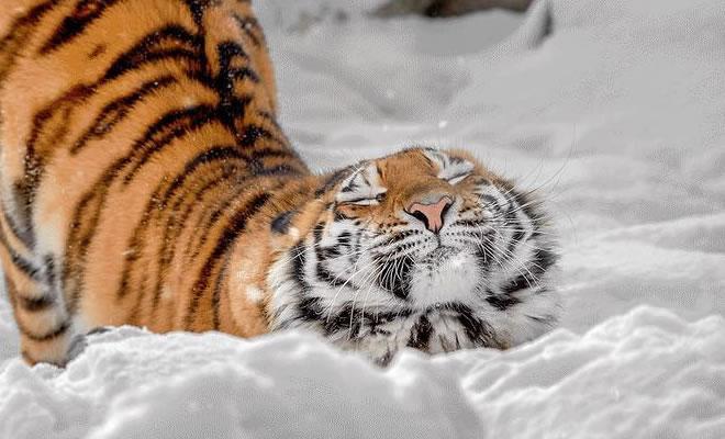 19 animais fotogênicos que superam qualquer modelo profissional 1