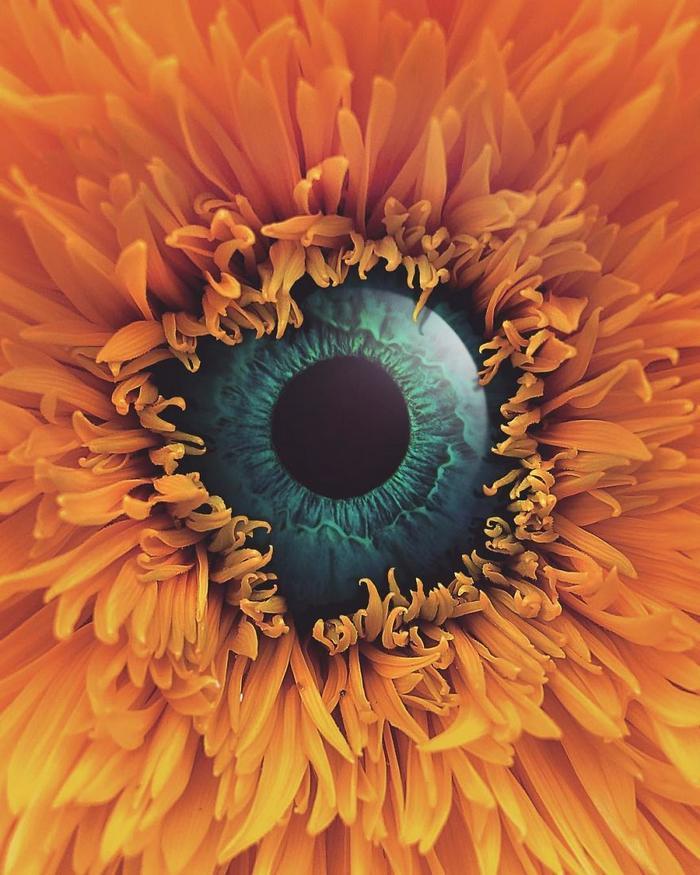 37 manipulações de fotos surreais que desafiam a lógica 11