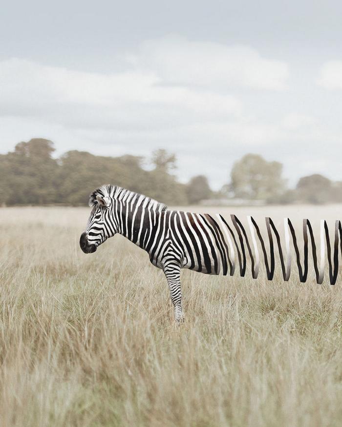 37 manipulações de fotos surreais que desafiam a lógica
