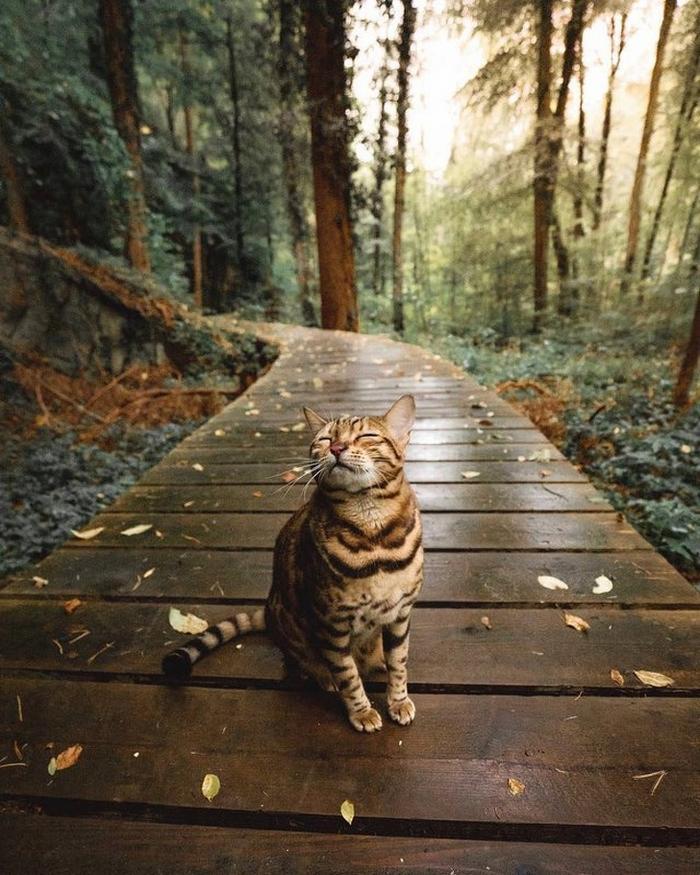 22 animais de estimação que agem tão estranho que você pode até duvidar que eles são animais 12