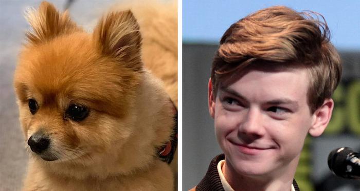 18 animais que se parecem exatamente com algumas celebridades 2