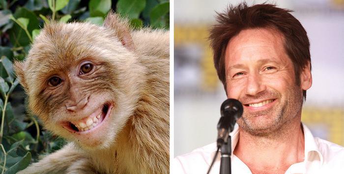 18 animais que se parecem exatamente com algumas celebridades 3