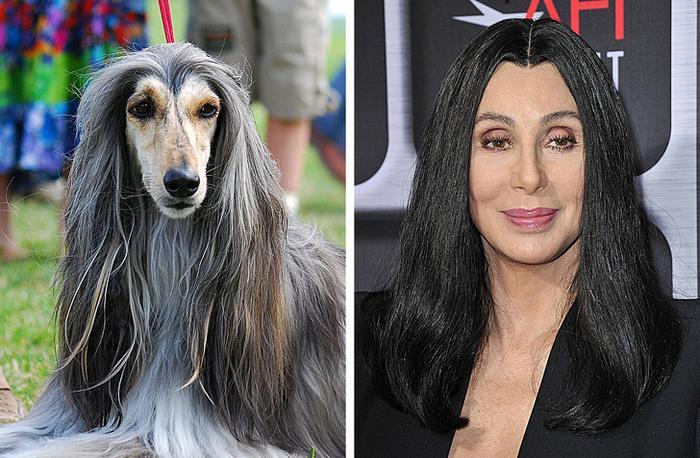 18 animais que se parecem exatamente com algumas celebridades 5