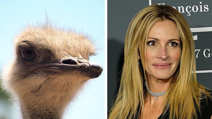 18 animais que se parecem exatamente com algumas celebridades 6