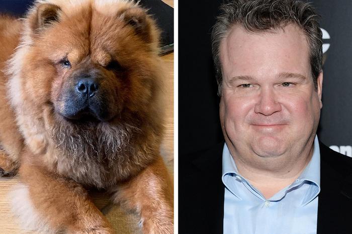 18 animais que se parecem exatamente com algumas celebridades 7