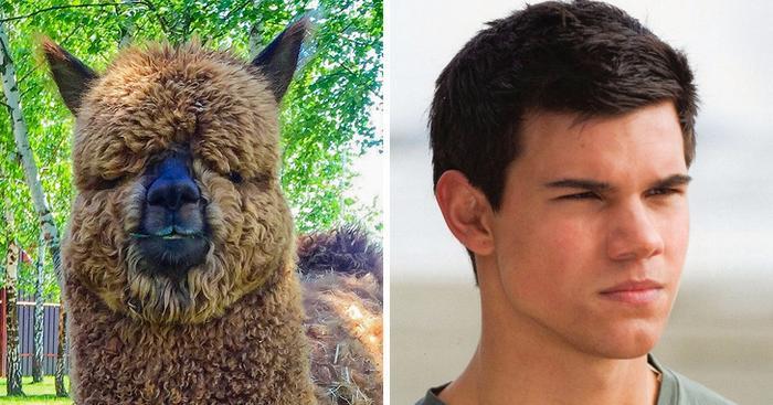 18 animais que se parecem exatamente com algumas celebridades 16