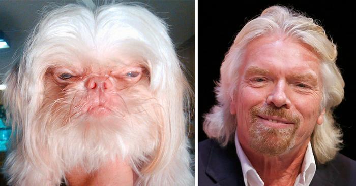 18 animais que se parecem exatamente com algumas celebridades 18