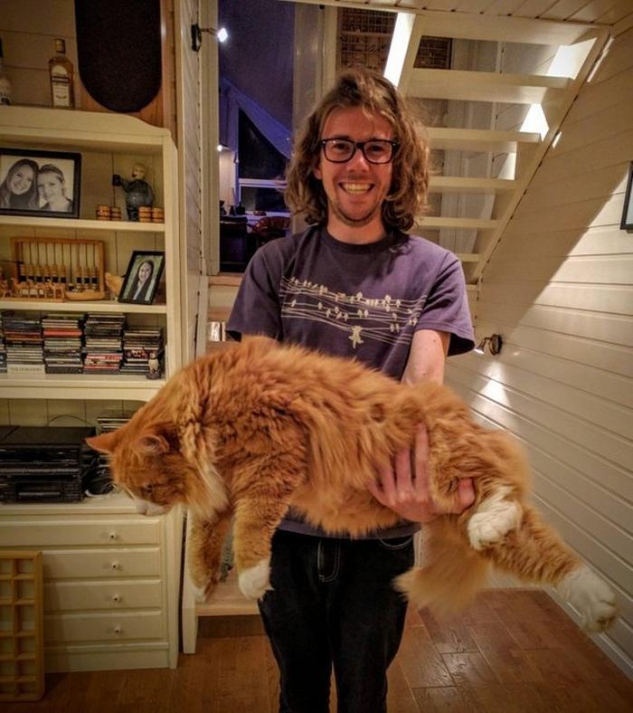25 fotos de gatos maine coon que são super majestosos e fofos 20