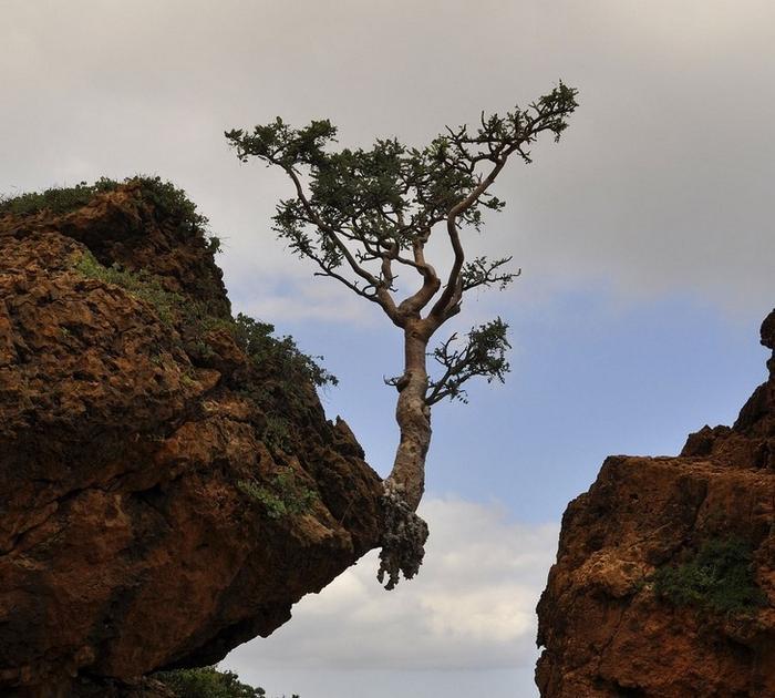 23 fotos dramáticas que mostram que a natureza sempre vence 15