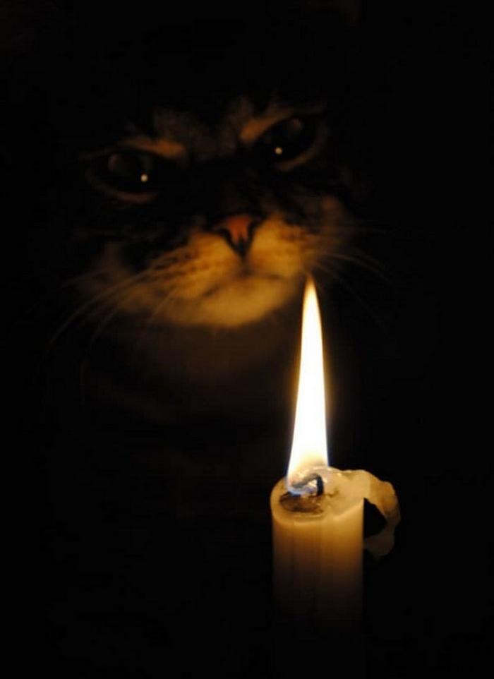 27 provas de que os gatos são demônios 3
