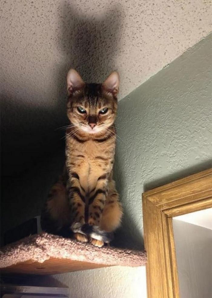27 provas de que os gatos são demônios 4