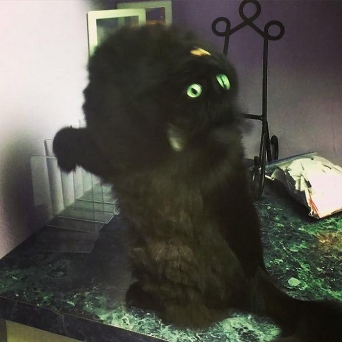 27 provas de que os gatos são demônios 5