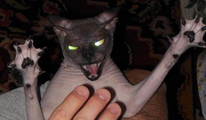 27 provas de que os gatos são demônios 6
