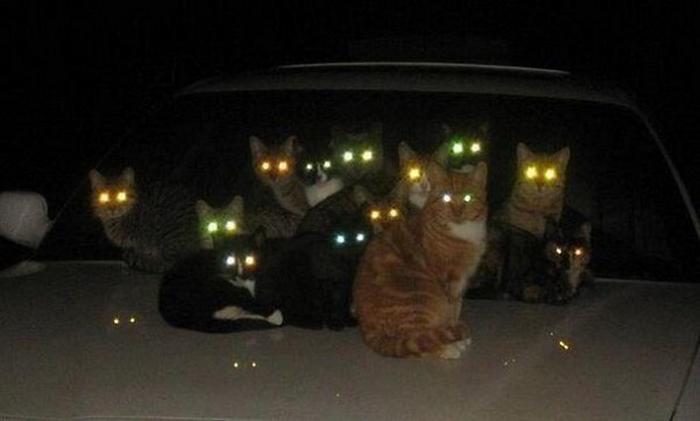 27 provas de que os gatos são demônios 8