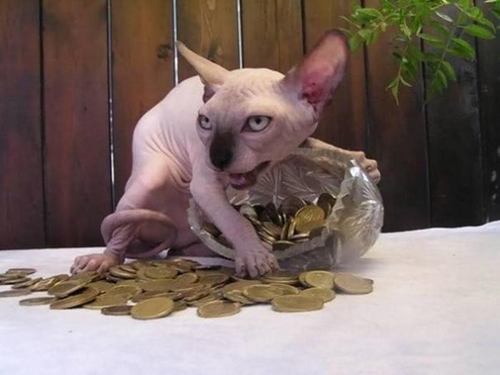27 provas de que os gatos são demônios 10