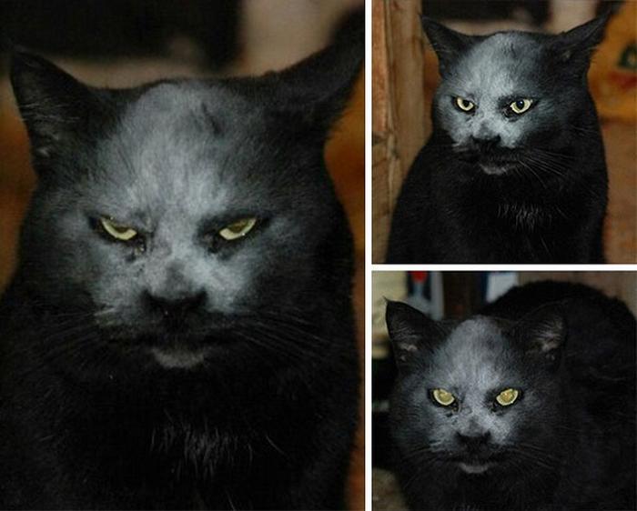 27 provas de que os gatos são demônios 11