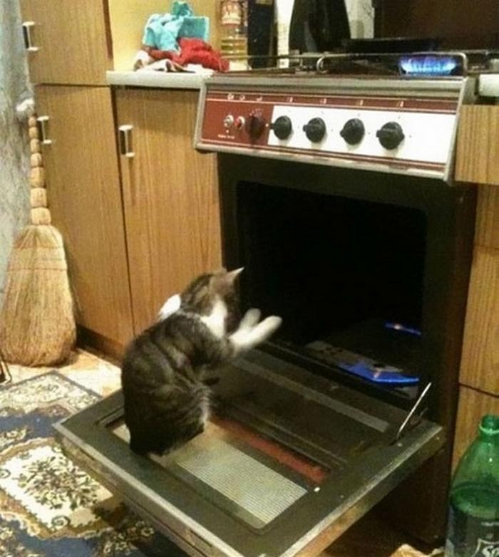 27 provas de que os gatos são demônios 12