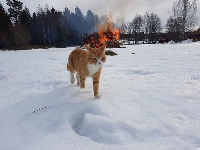 27 provas de que os gatos são demônios 13