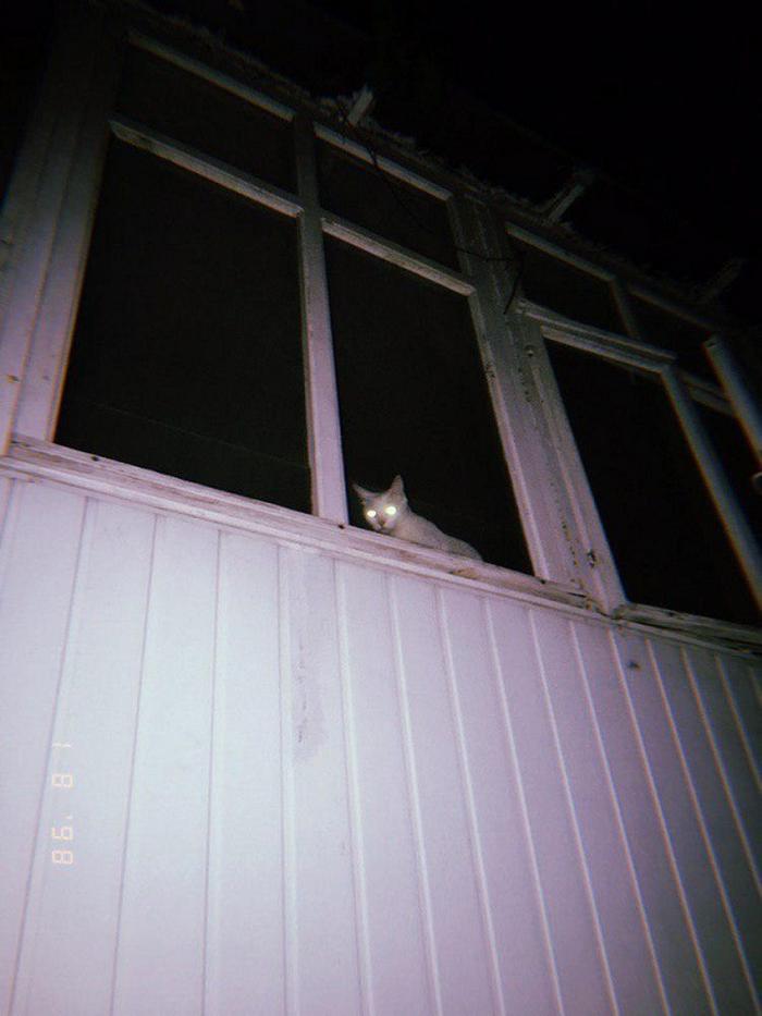 27 provas de que os gatos são demônios 14