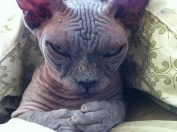 27 provas de que os gatos são demônios 15