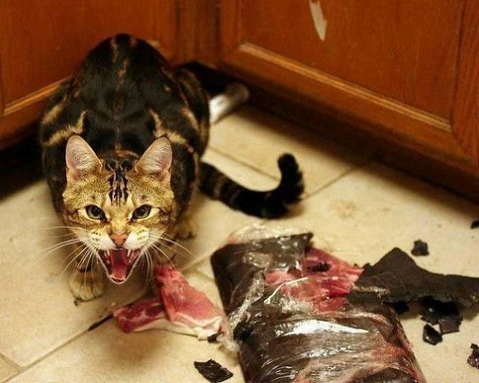 27 provas de que os gatos são demônios 16