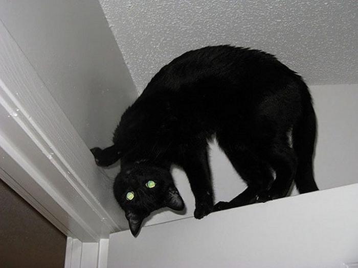 27 provas de que os gatos são demônios 17