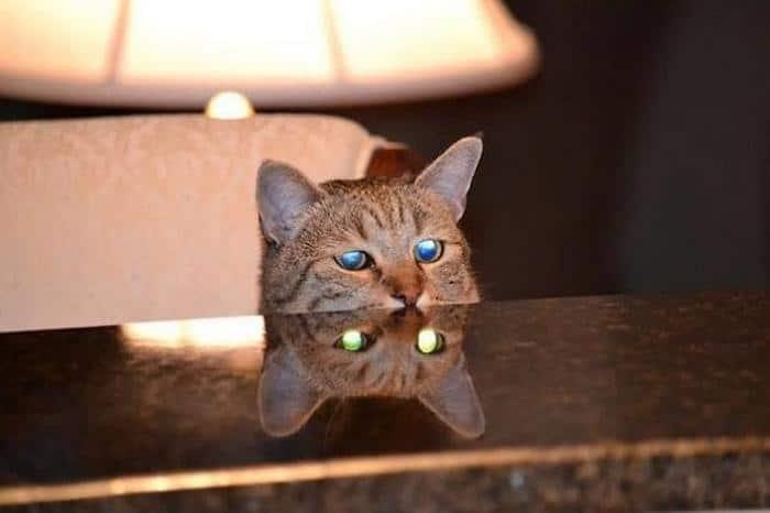 27 provas de que os gatos são demônios 19