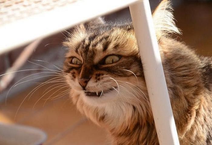 27 provas de que os gatos são demônios 20