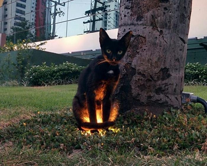 27 provas de que os gatos são demônios 22