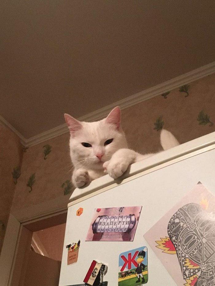 27 provas de que os gatos são demônios 23