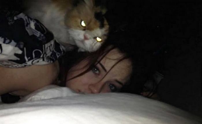 27 provas de que os gatos são demônios 24
