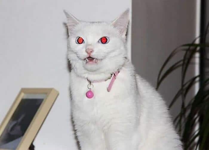 27 provas de que os gatos são demônios 26